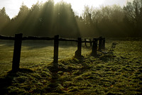 Winter sun on Henfield Common